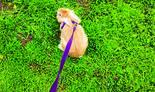 איריס פרדלין מטיילת עם הארנבת 'חומי'