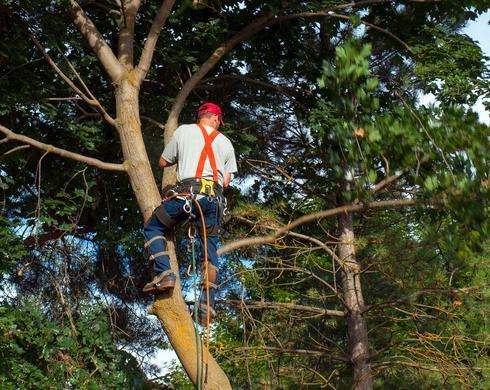 במהלך שש שנים נכרתו או הועתקו במרחב העירוני כ-450 אלף עצים