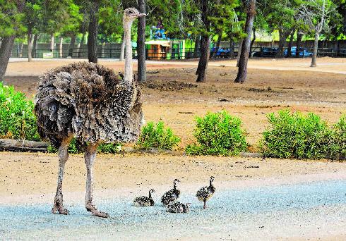 משפחת היענים