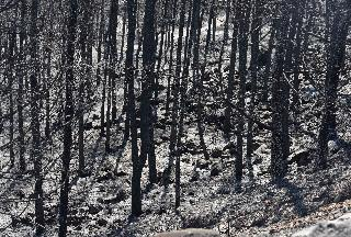 הנזק העצום שנגרם ליער מורדות נצרת בשריפה הגדולה בתולדות נוף הגליל