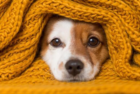 כלבים בחורף