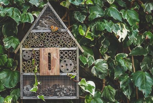 מלון החרקים נותן להם בית ומחסה. ניתן לייצר בבית או לקנות און ליין