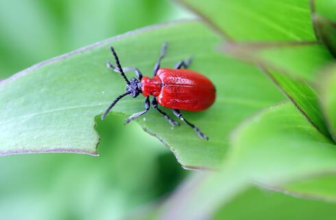 החרקים מאביקים 75 אחוז מהיבולים החקלאיים ומהווים את תחילתה של שרשרת המזון