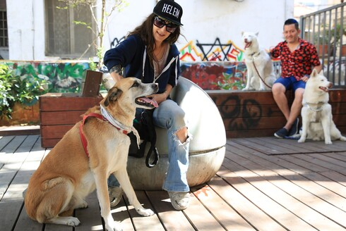"""קמפיין הגרילה העירוני בתל אביב לאיסוף צואה מתסיס בעלי כלבים רבים שמחזירים אש: """"העירייה משקיעה כסף בקמפיין במקום באכיפה"""""""
