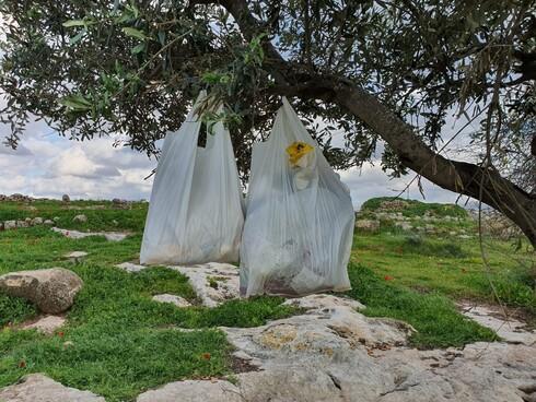 מראה כזה עוד לא ראו עיניי: שקיות זבל צומחות על עץ!