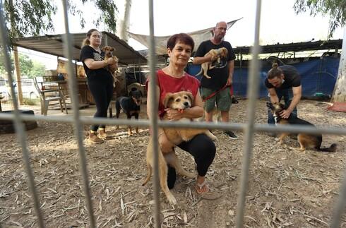 אחרי 18 שנים הכלבייה ביער חדרה בסכנת סגירה. למקום הוצא צו פינוי ולטענת הפעילים העירייה טרם מצאה להם מקום חלופי