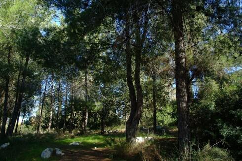 הפנינג היער הקסום
