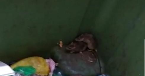 חולדות ברחוב יוספטל | צילום מסך: חנה חיים
