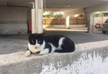 חתול בת ימי. צילום: דוברות עיריית בת ים